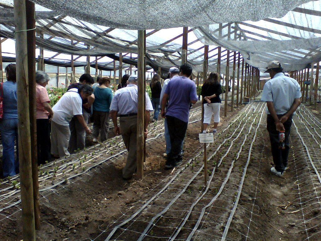 Extension e Innovacion Rural