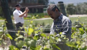 Sistemas Productivos Agropecuarios