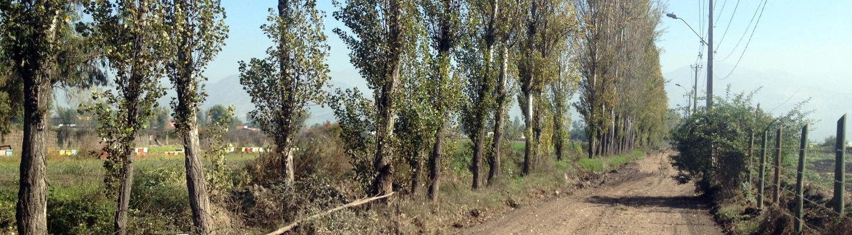 Area de proyectos agrario